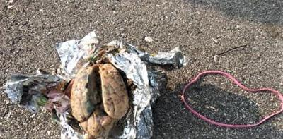 Police investigating discovery of brain-like object at Myers Park