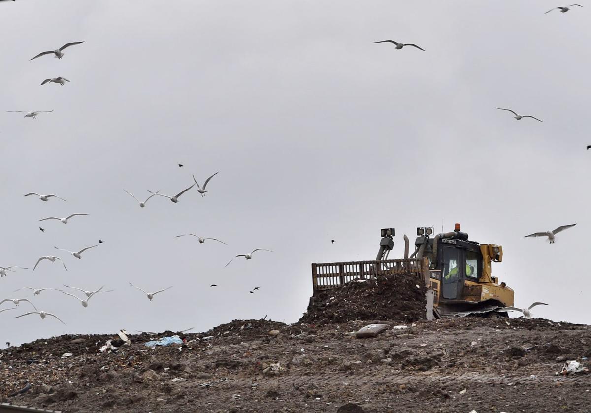 Kestrel Hawk landfill