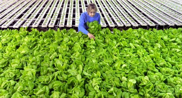 Natural Green Farms