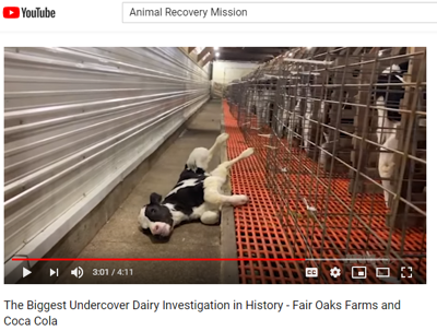 The Biggest Undercover Dairy Investigation in History   Fair Oaks Farms and Coca Cola   YouTube.png