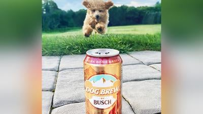 Busch Dog Brew