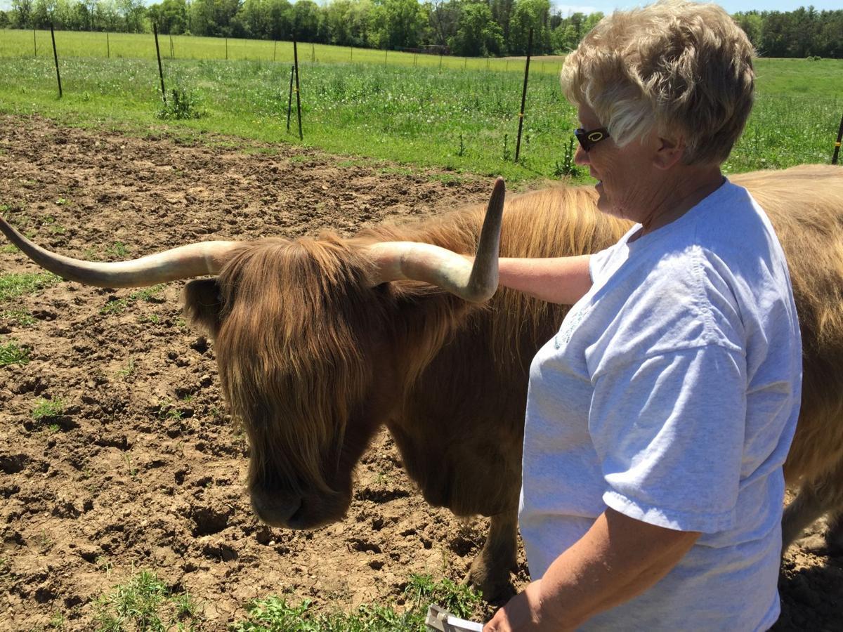 Local Farm Raises Distinctive Scottish Highland Cattle