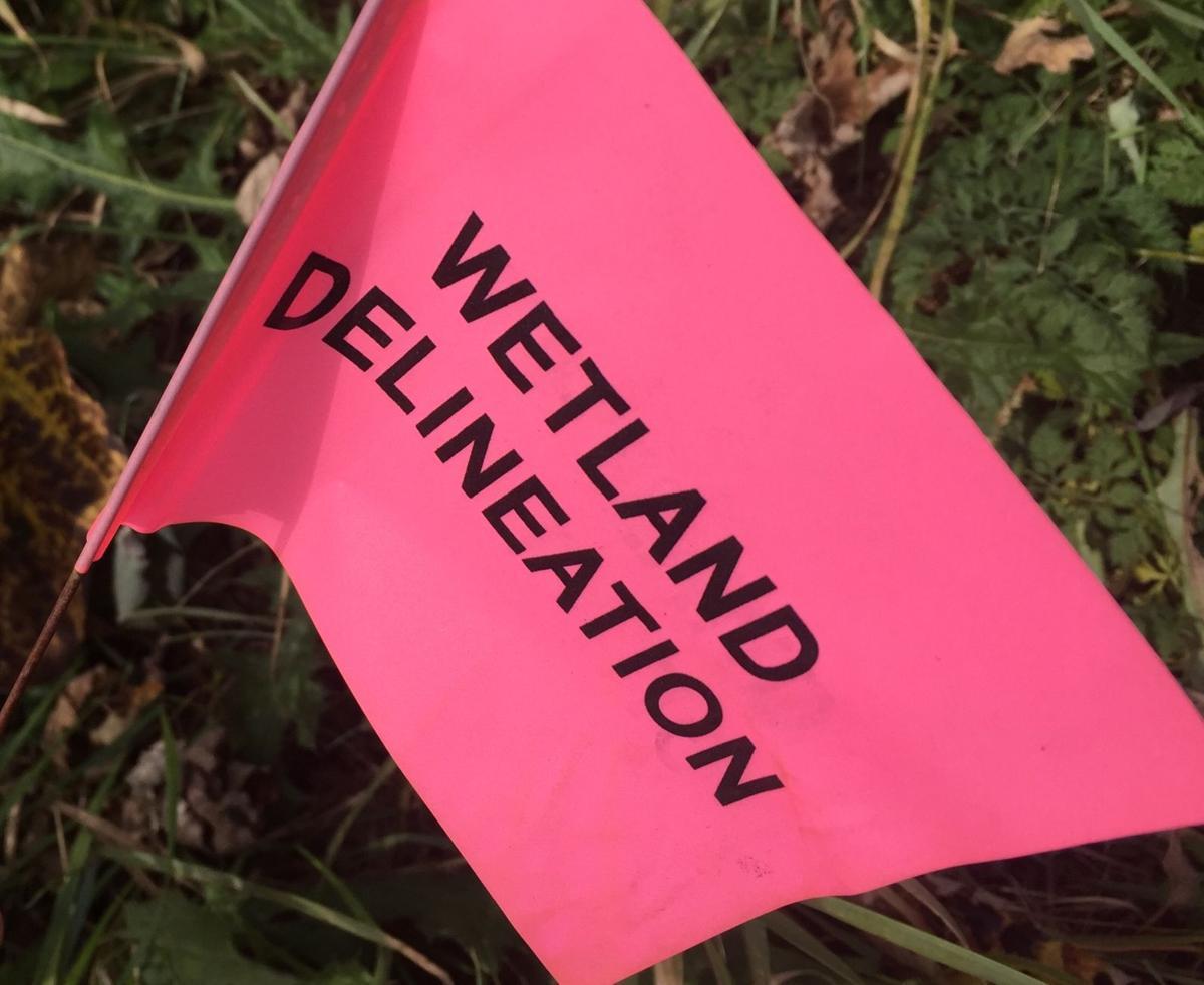 Wetland delineation in Mount Pleasant