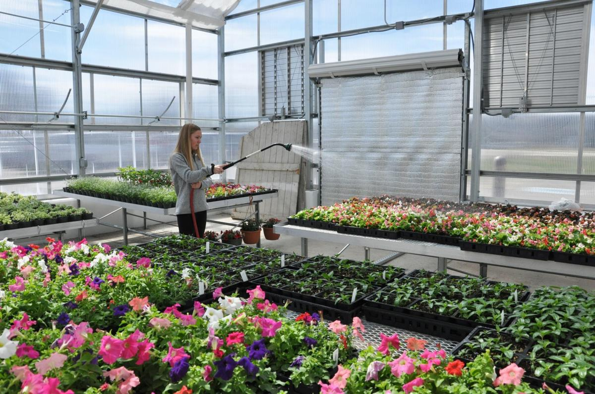 Union Grove students get hands-on experience in agriculture -- Greenhouse
