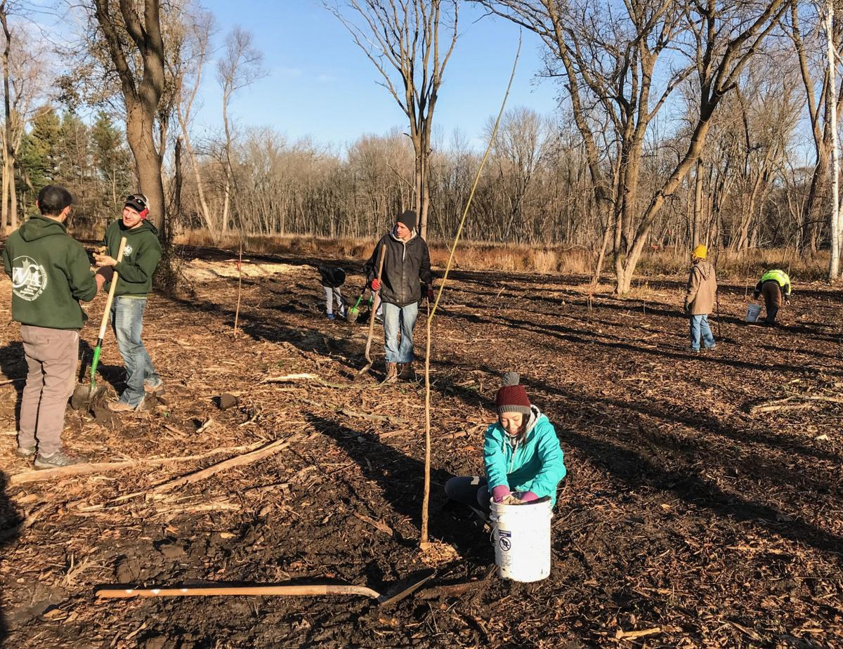 Colonial Park tree planting