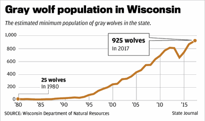 Gray wolf population in Wisconsin