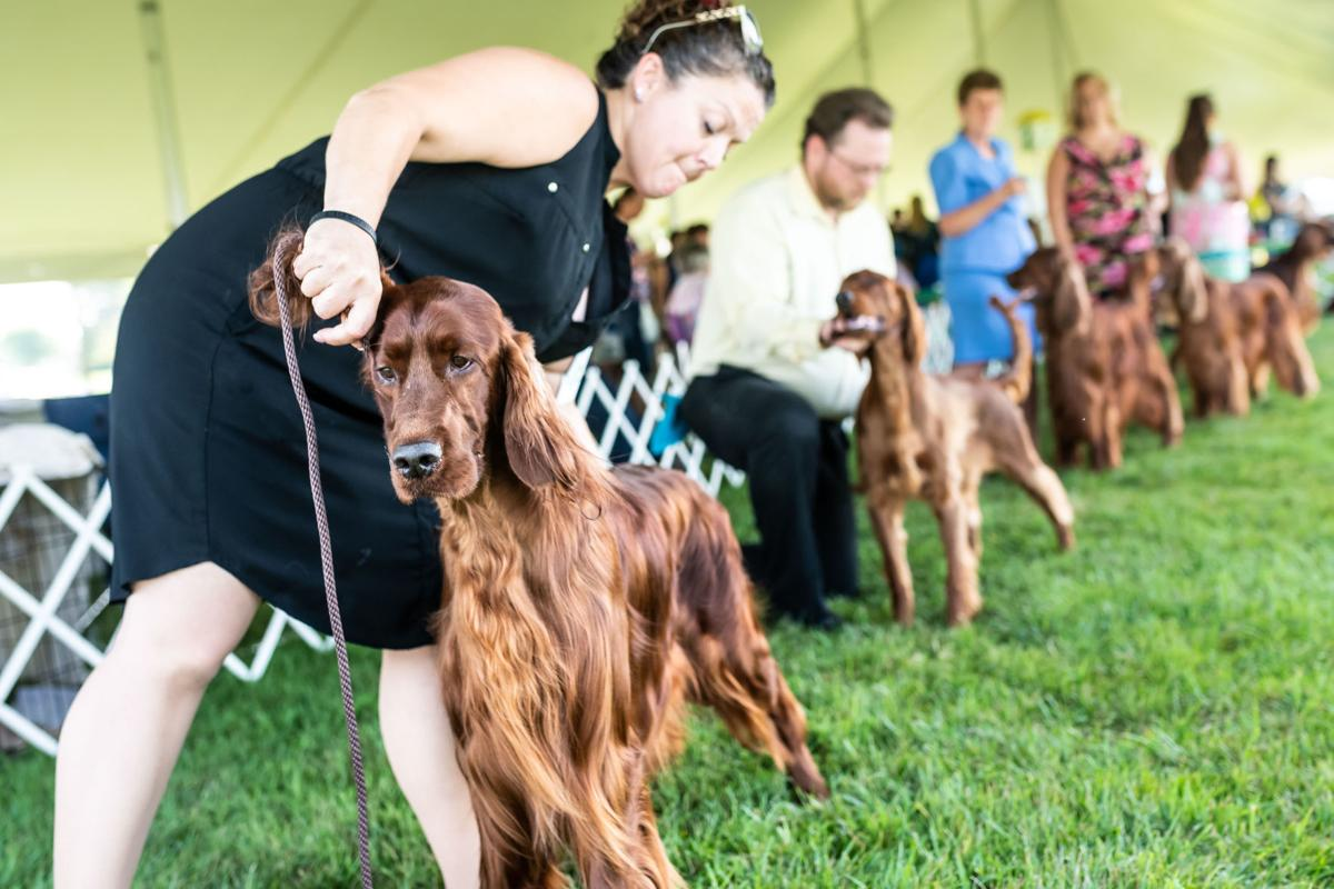All Breed Dog Show