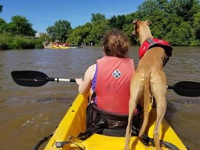 Dog kayaking on the Root River