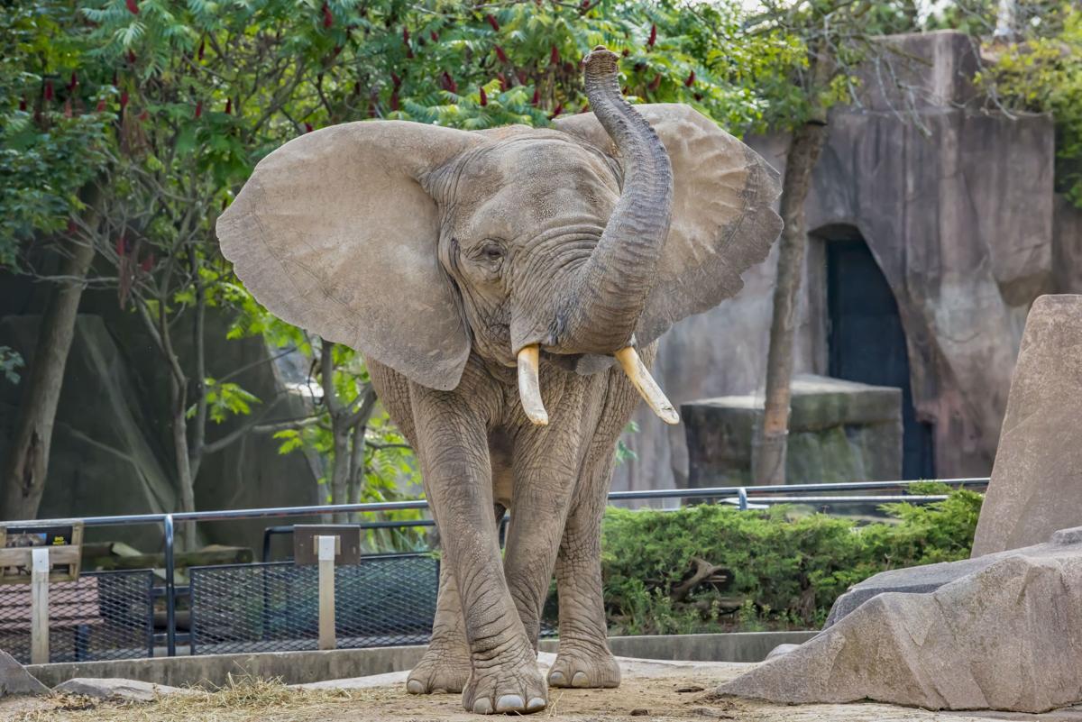 Milwaukee Zoo elephant