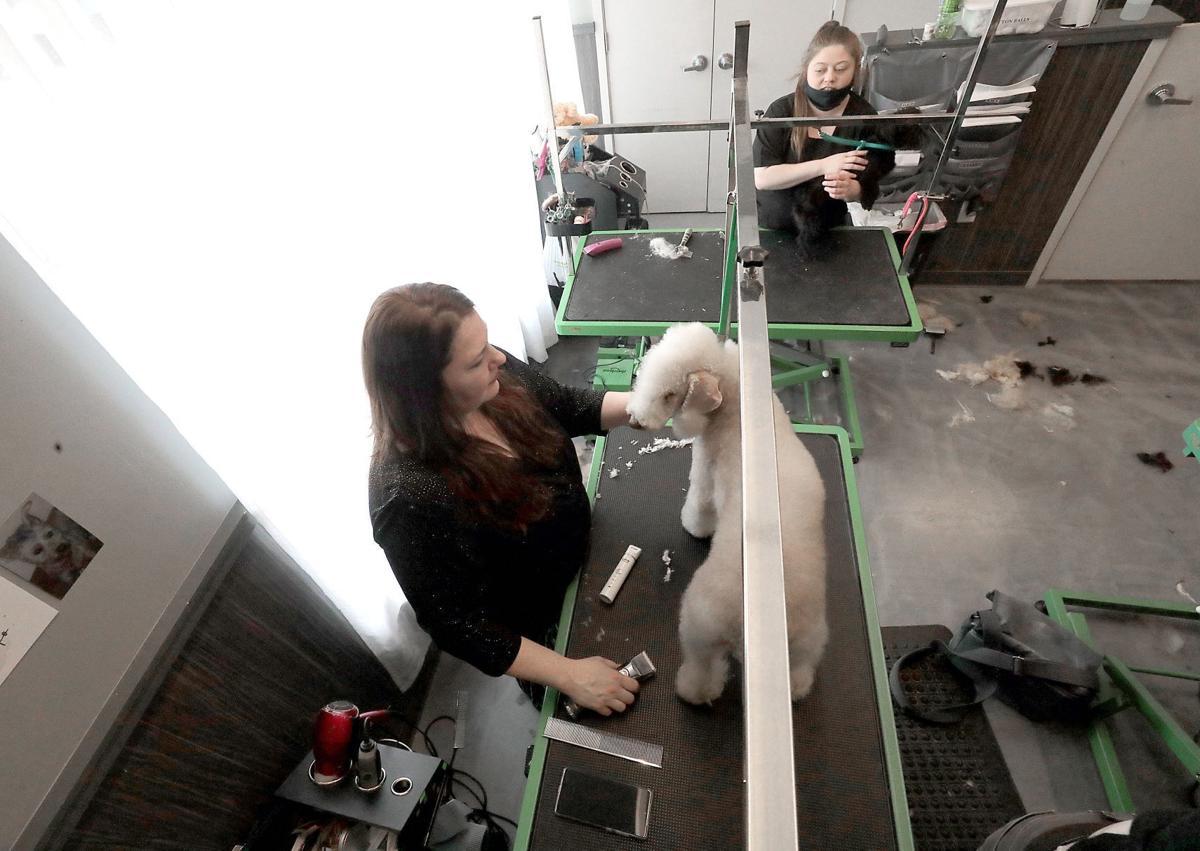 Grooming Ripley at Pet Supplies Plus