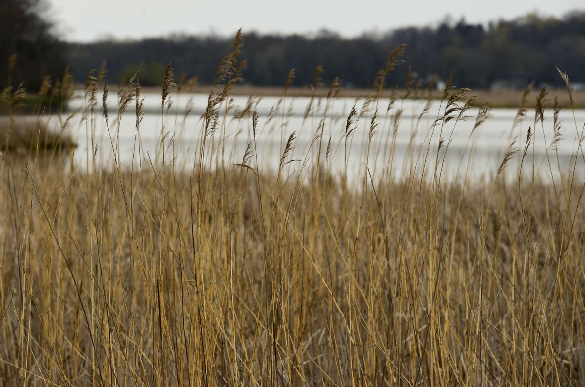 Wetlands - Tichigan Wildlife Area