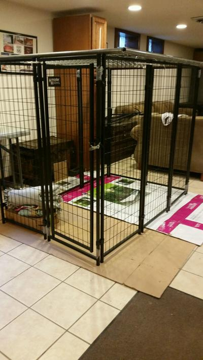 Caretakers reportedly kept child in cage