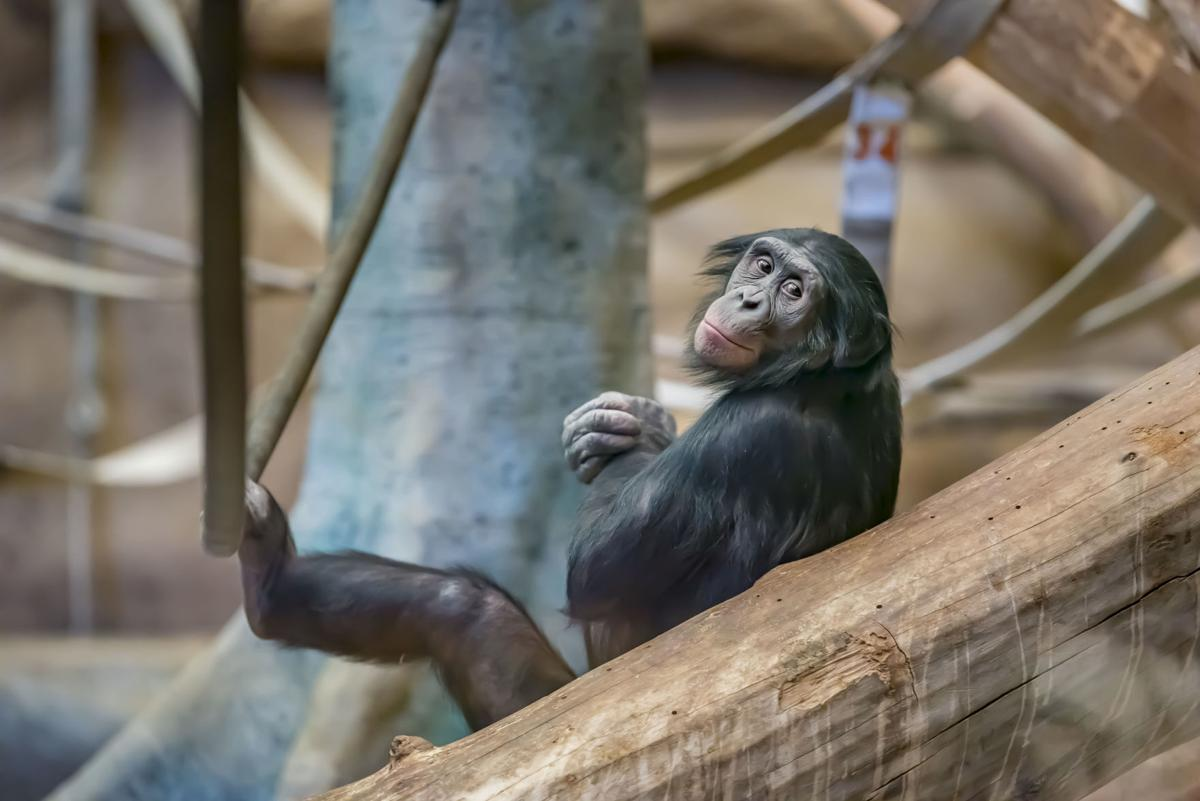 Milwaukee County Zoo monkey