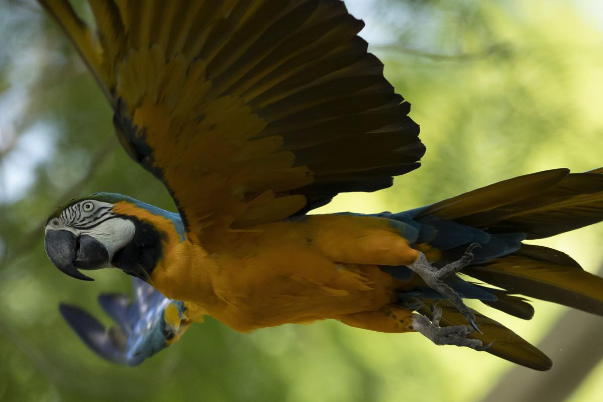 APTOPIX Brazil Rio Macaw Love