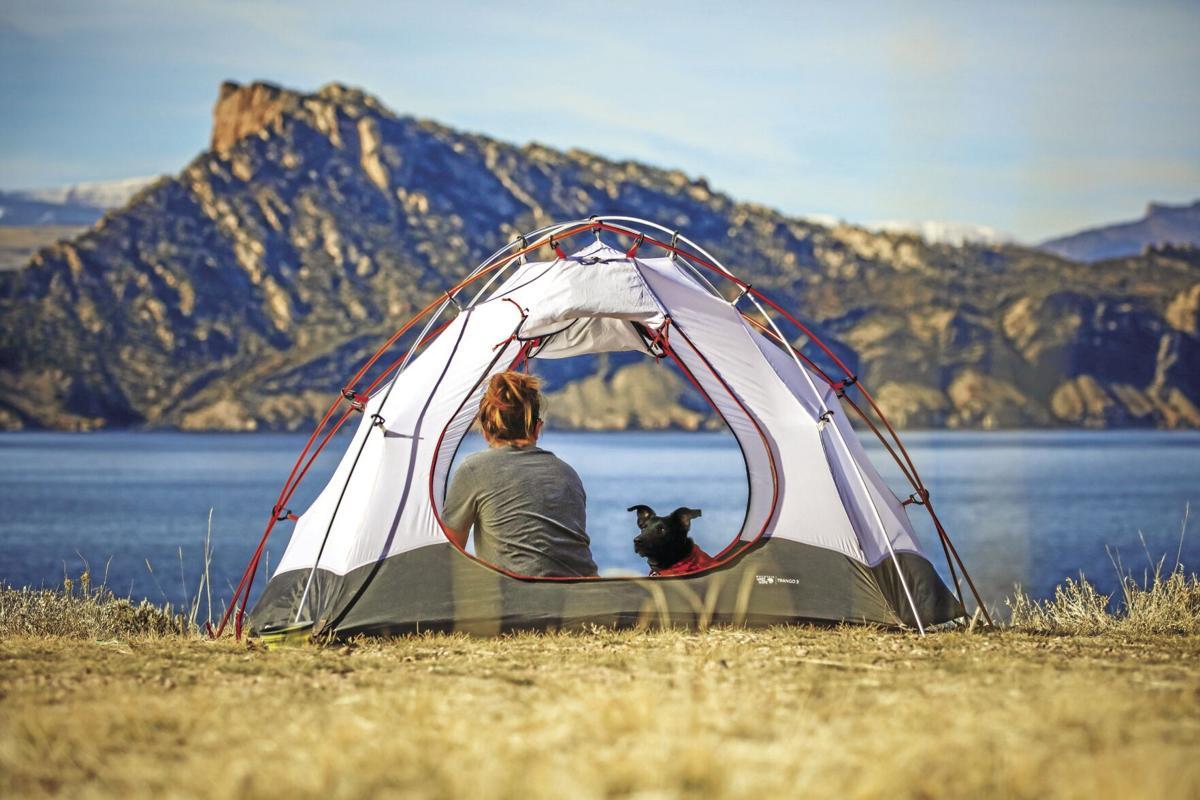 Dog - camping