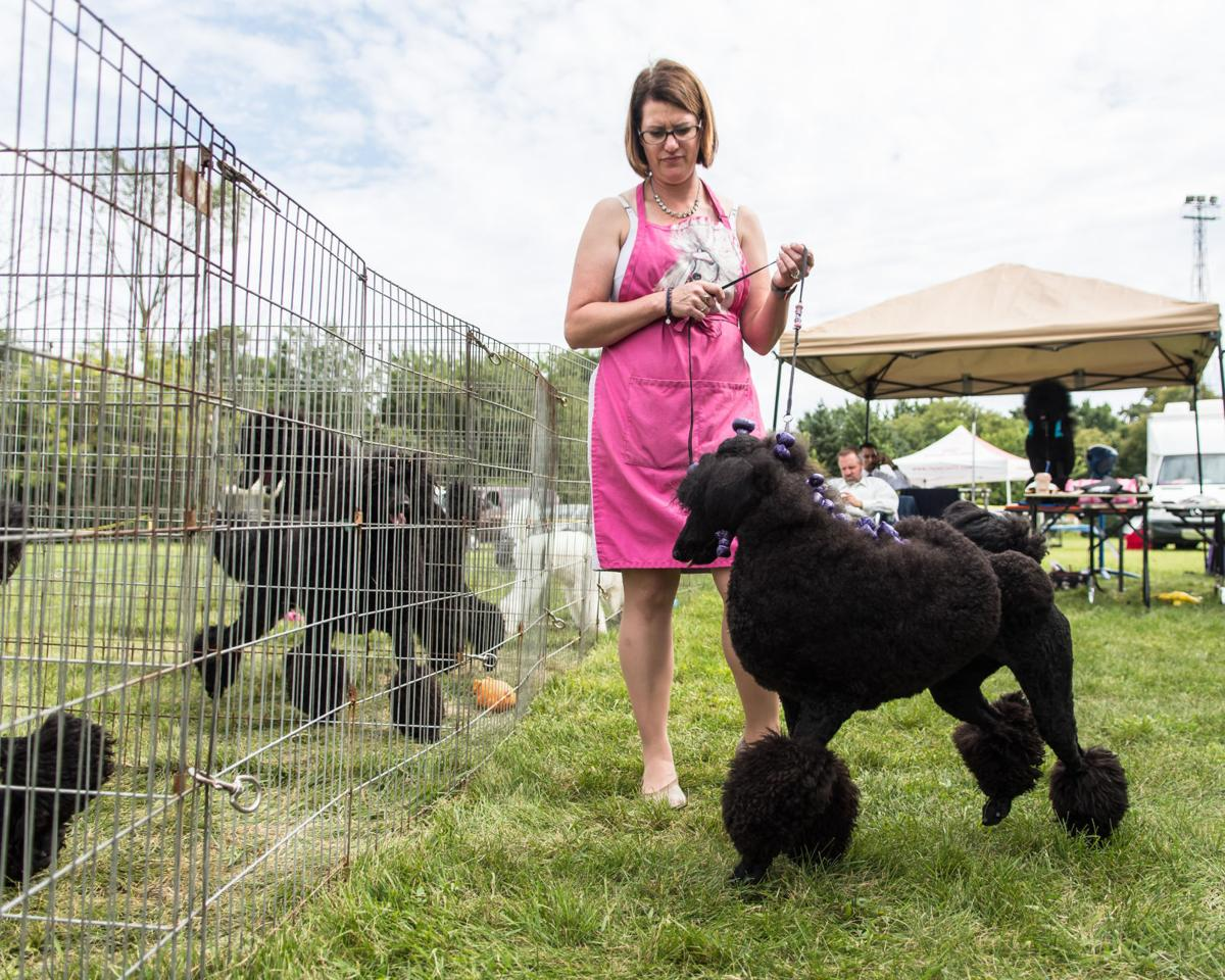 Greater Racine Kennel Club Dog Show Brings Bark To The Park