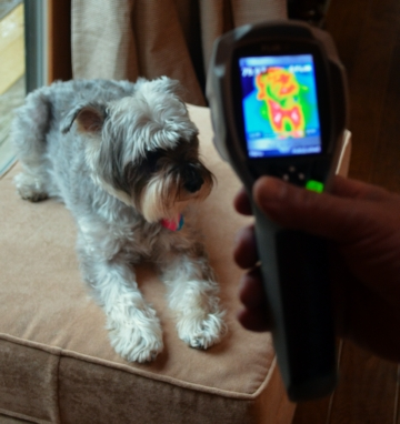 Pest Control Company Using Thermal Imaging Money