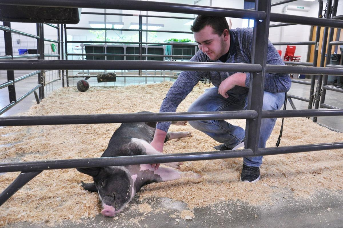 Union Grove students get hands-on experience in agriculture - Pig