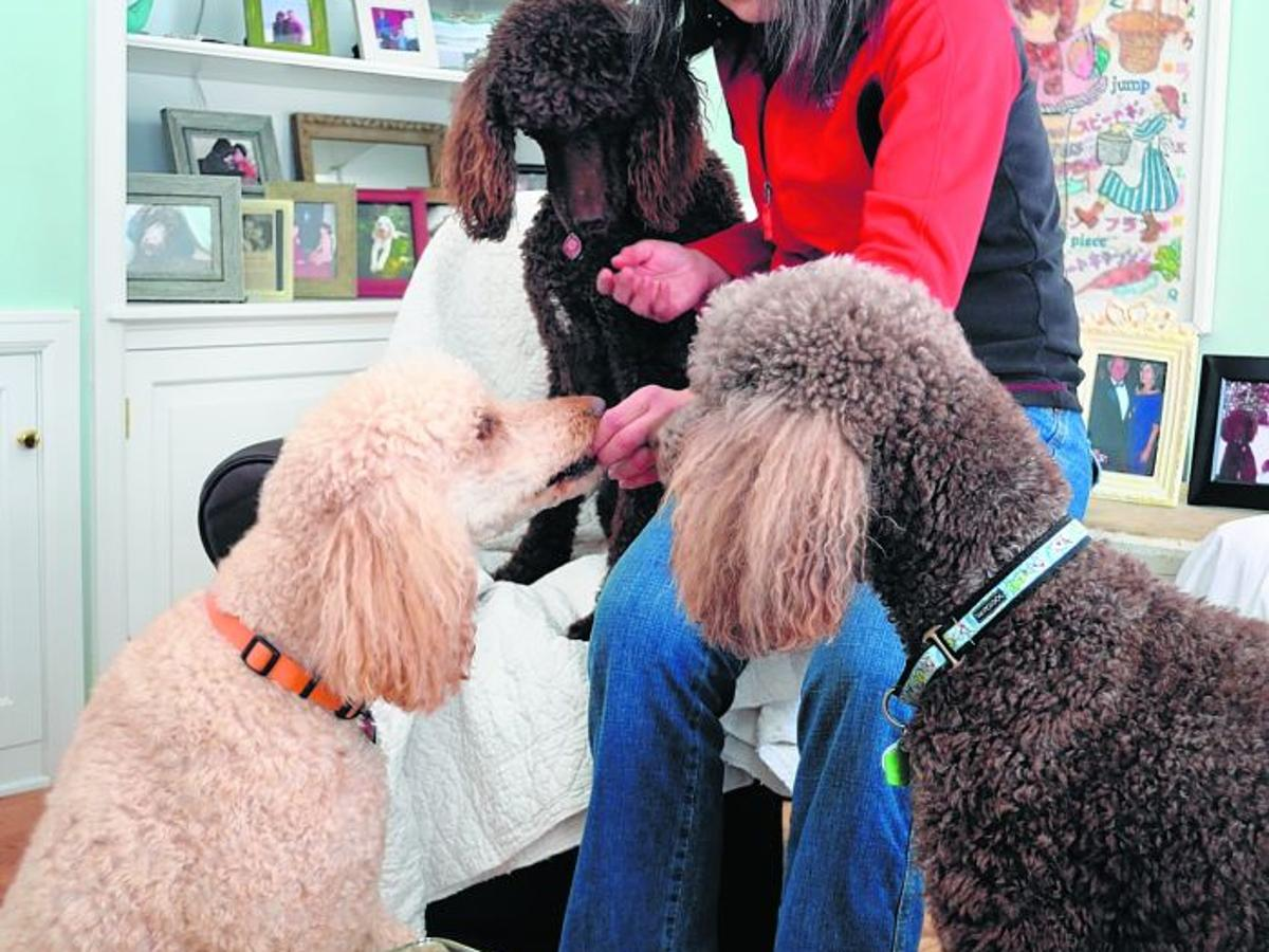 Who Ll Let The Dogs Out After Corporate Downsizing Woman Builds Flourishing Six County Pet Care Service Local News Journaltimes Com