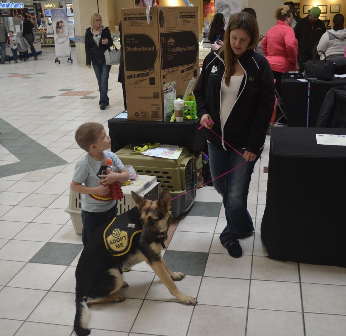 Pet adoption event at Regency Mall