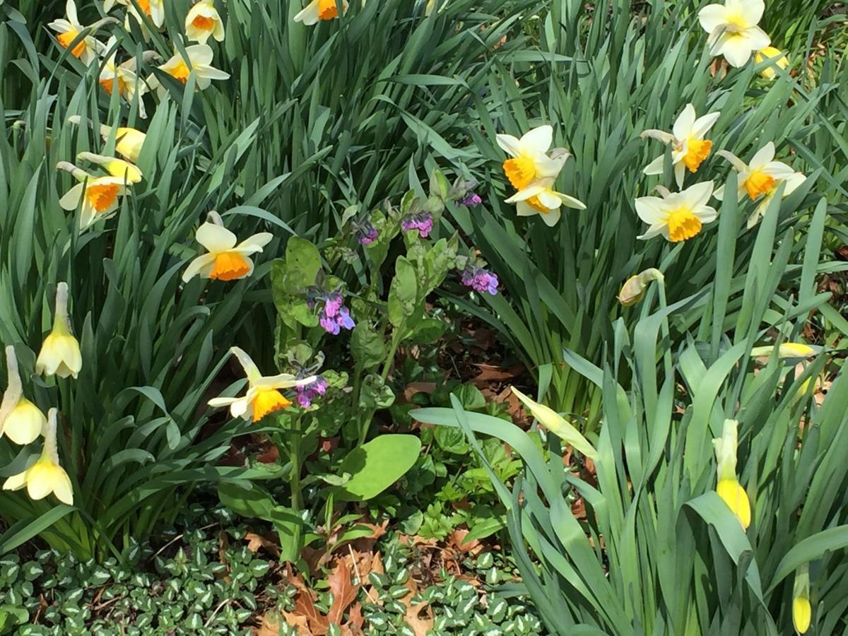 DeKoven flowers