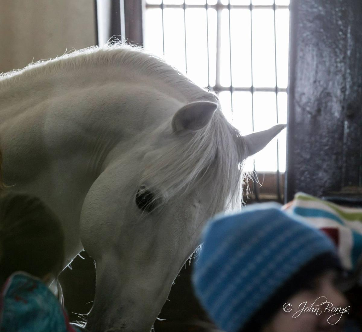 Meeting the Stallions