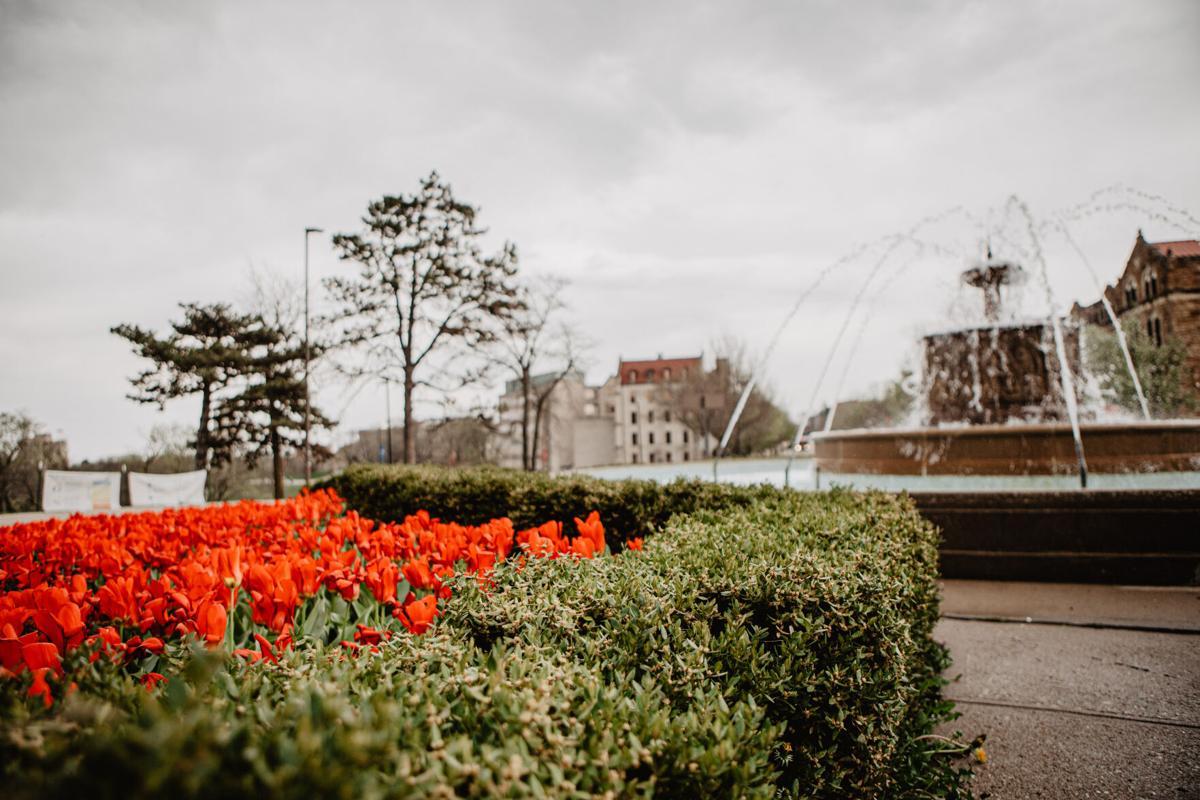 Campus Flowers-25.jpg