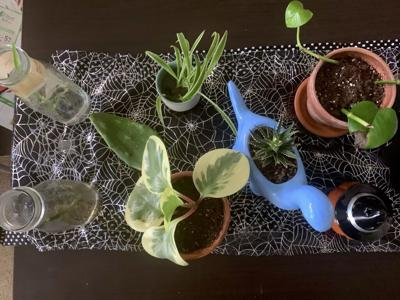 Do this: Propagate your plants