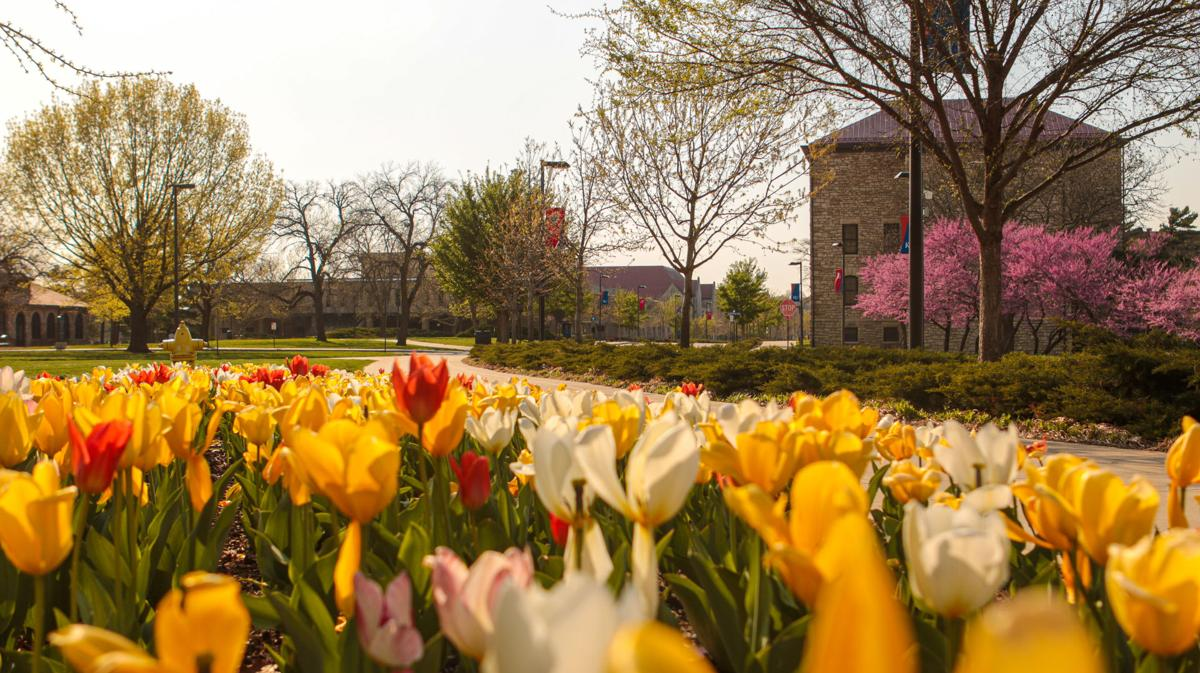 Multicolored tulips decorate the foreground of Jayhawk Boulevard