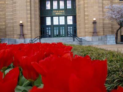 Tulips bloom in front of the main stairwell entrance to Strong Hall (copy)