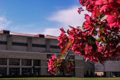Campus in Bloom-6.jpg