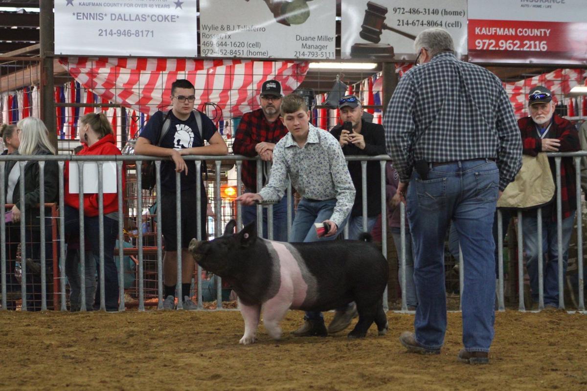 Aidan's pig