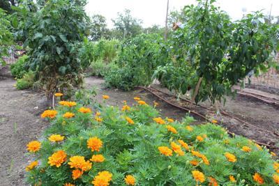 Vintage garden market set for this weekend