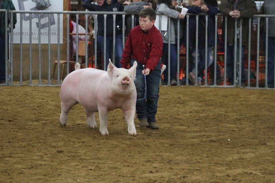 Wyatt's pig