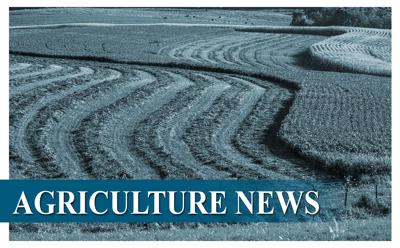 AG News graphic