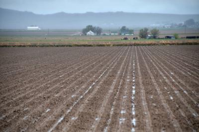USDA: Nebraska at 81% corn planted, U.S. at 58 percent