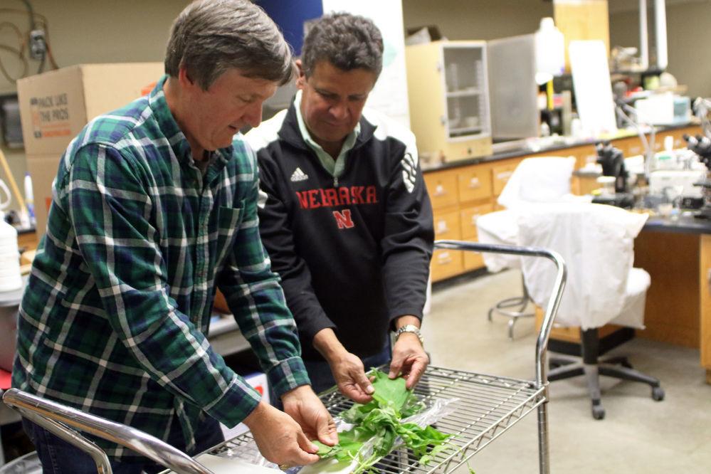 Creating disease resistant plants