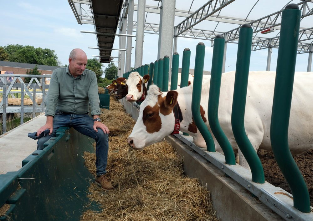 Dutch farm floats possibilities of urban dairy production