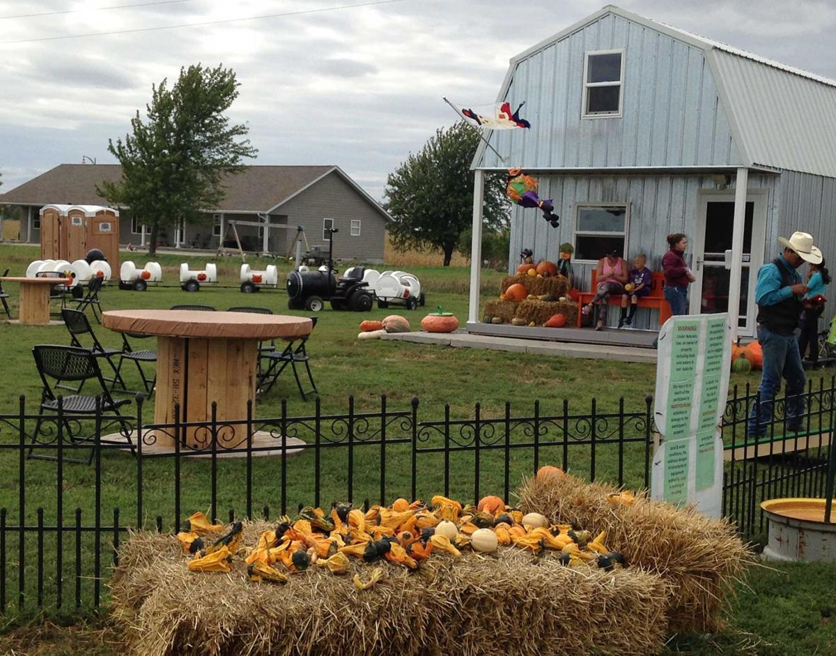 I found the perfect pumpkin patch | Yard-and-garden | kearneyhub.com
