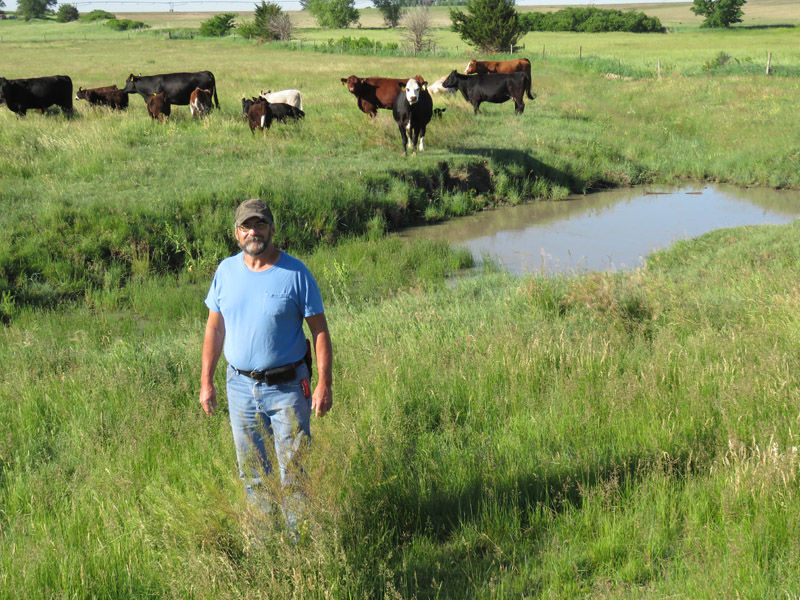 Cattle, Ron2.JPG