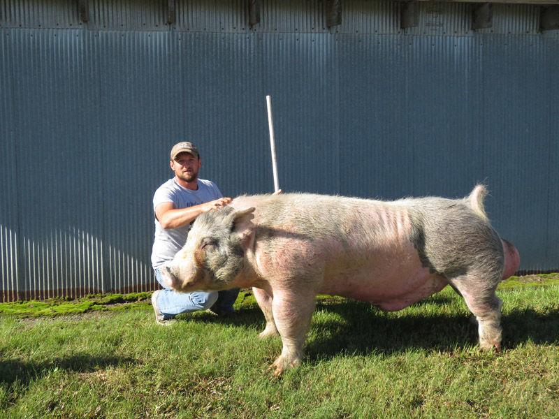Dusty and boar1.JPG