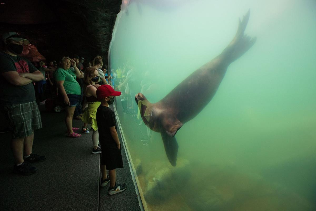 20200909_new_sealions_zl4