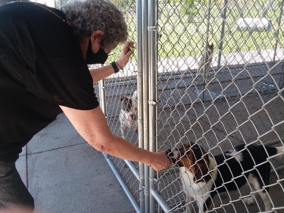 Kearney Animal Shelter