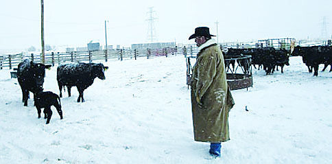 DEBRA HAMBRICK: What it takes to be a Rancher
