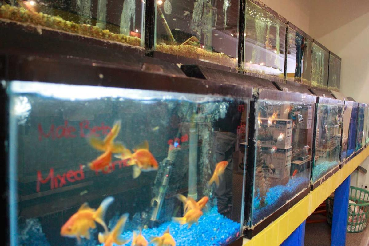Pet kingdom owner celebrates 25 years of business local for Fish and more pet store