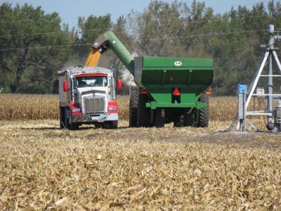Harvest Kearney