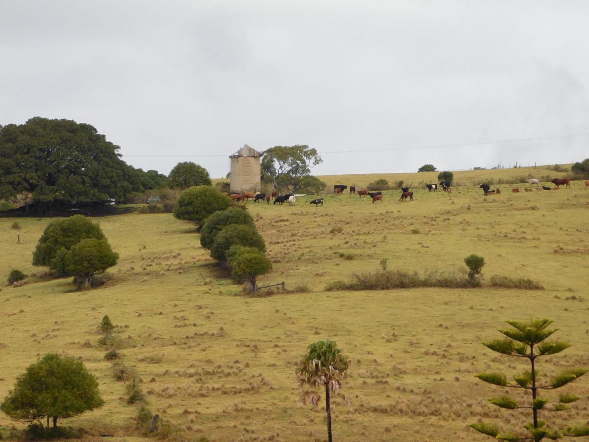 Pasture - NSW (1).jpg