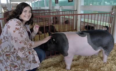 Fair Grand Champion Market Hog