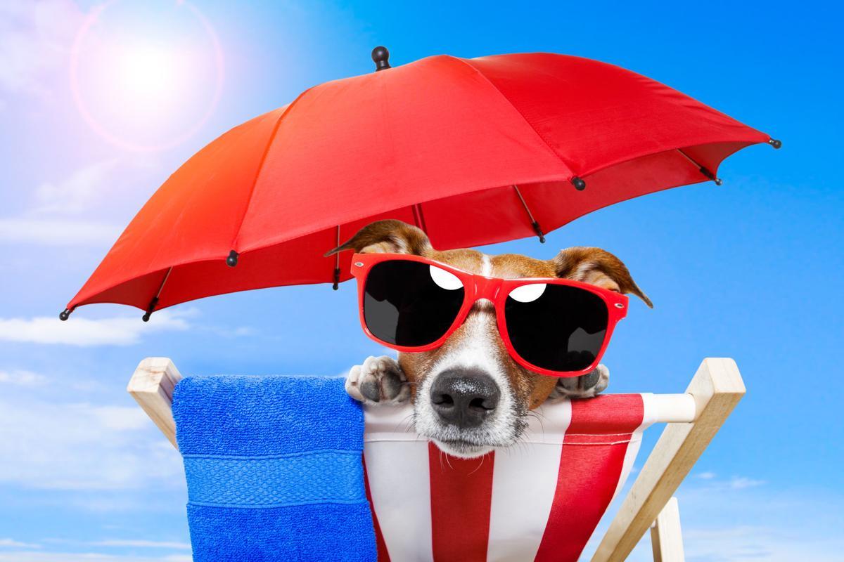 Dog Days dog on beach chair