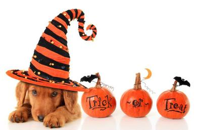 5 Spot: Tips for trick-or-treating with your dog